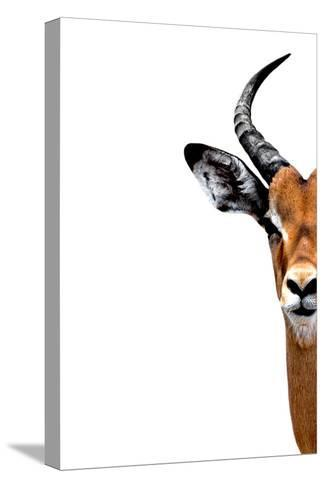 Safari Profile Collection - Antelope Face White Edition II-Philippe Hugonnard-Stretched Canvas Print