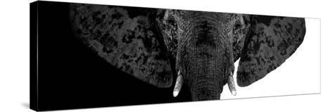 Safari Profile Collection - Elephant B&W II-Philippe Hugonnard-Stretched Canvas Print
