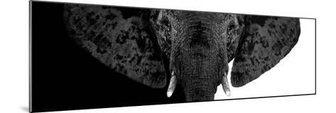 Safari Profile Collection - Elephant B&W II-Philippe Hugonnard-Mounted Photographic Print