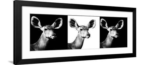 Safari Profile Collection - Antelopes Impalas Portraits IV-Philippe Hugonnard-Framed Art Print