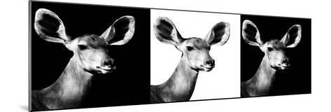 Safari Profile Collection - Antelopes Impalas Portraits IV-Philippe Hugonnard-Mounted Photographic Print
