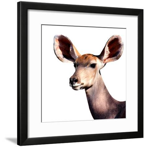 Safari Profile Collection - Antelope Impala Portrait White Edition V-Philippe Hugonnard-Framed Art Print
