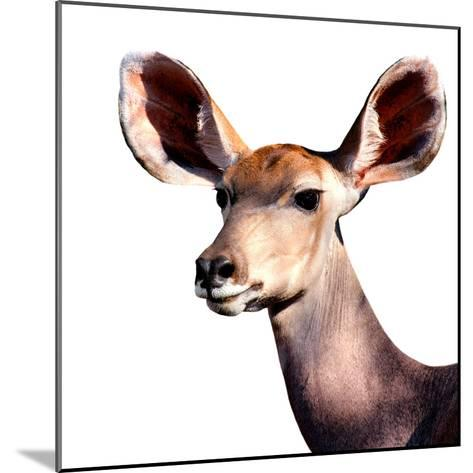Safari Profile Collection - Antelope Impala Portrait White Edition V-Philippe Hugonnard-Mounted Photographic Print