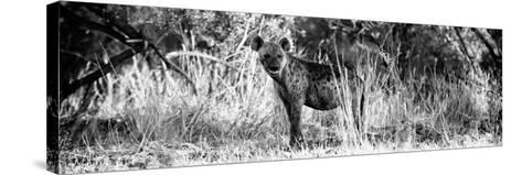 Awesome South Africa Collection Panoramic - Hyena B&W-Philippe Hugonnard-Stretched Canvas Print