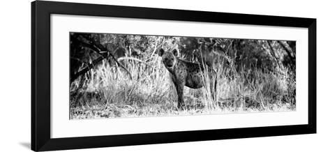 Awesome South Africa Collection Panoramic - Hyena B&W-Philippe Hugonnard-Framed Art Print