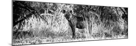 Awesome South Africa Collection Panoramic - Hyena B&W-Philippe Hugonnard-Mounted Photographic Print