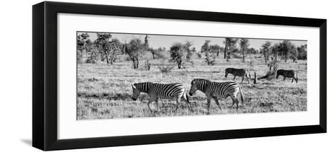 Awesome South Africa Collection Panoramic - Herd of Burchell's Zebras B&W-Philippe Hugonnard-Framed Art Print