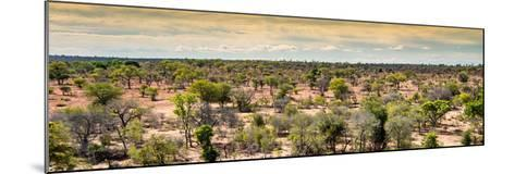 Awesome South Africa Collection Panoramic - Wide Landscape with Trees-Philippe Hugonnard-Mounted Photographic Print