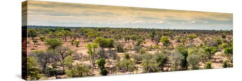 Awesome South Africa Collection Panoramic - Wide Landscape with Trees-Philippe Hugonnard-Stretched Canvas Print