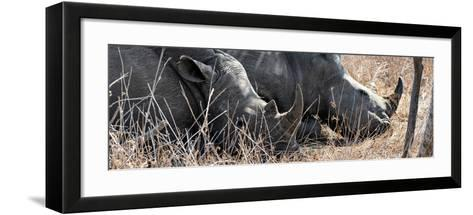 Awesome South Africa Collection Panoramic - White Rhinos Sleeping-Philippe Hugonnard-Framed Art Print