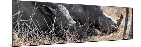 Awesome South Africa Collection Panoramic - White Rhinos Sleeping-Philippe Hugonnard-Mounted Photographic Print