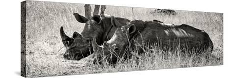 Awesome South Africa Collection Panoramic - Two White Rhinos II-Philippe Hugonnard-Stretched Canvas Print