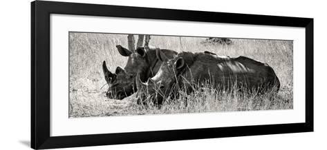 Awesome South Africa Collection Panoramic - Two White Rhinos II-Philippe Hugonnard-Framed Art Print