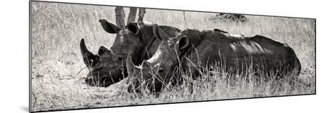 Awesome South Africa Collection Panoramic - Two White Rhinos II-Philippe Hugonnard-Mounted Photographic Print