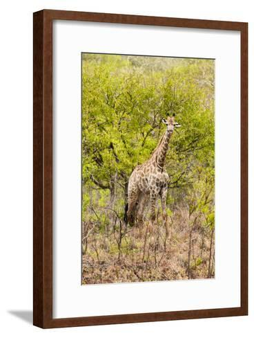 Awesome South Africa Collection - Giraffe-Philippe Hugonnard-Framed Art Print