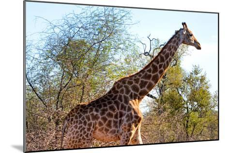 Awesome South Africa Collection - Giraffe at Sunset I-Philippe Hugonnard-Mounted Photographic Print