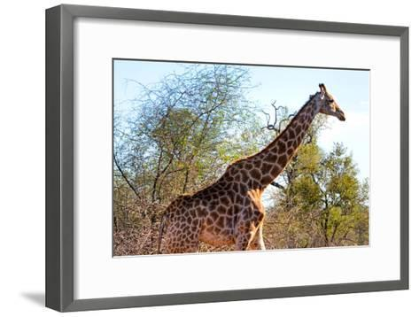 Awesome South Africa Collection - Giraffe at Sunset I-Philippe Hugonnard-Framed Art Print
