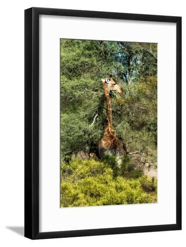 Awesome South Africa Collection - Giraffe eating from the Tree-Philippe Hugonnard-Framed Art Print