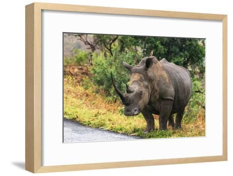 Awesome South Africa Collection - Rhinoceros-Philippe Hugonnard-Framed Art Print