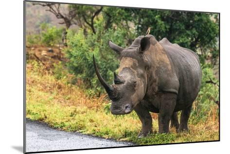 Awesome South Africa Collection - Rhinoceros-Philippe Hugonnard-Mounted Photographic Print