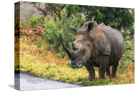 Awesome South Africa Collection - Rhinoceros-Philippe Hugonnard-Stretched Canvas Print