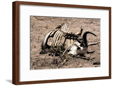 Awesome South Africa Collection - Safari Bone-Philippe Hugonnard-Framed Art Print