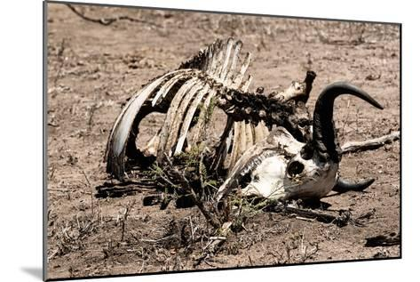 Awesome South Africa Collection - Safari Bone-Philippe Hugonnard-Mounted Photographic Print