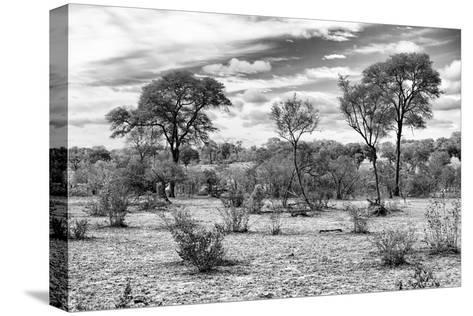 Awesome South Africa Collection B&W - African Landscape IV-Philippe Hugonnard-Stretched Canvas Print