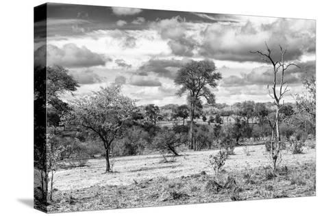 Awesome South Africa Collection B&W - African Landscape VII-Philippe Hugonnard-Stretched Canvas Print