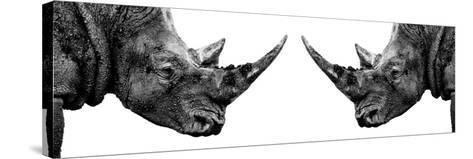 Safari Profile Collection - Rhinos Face to Face White Edition II-Philippe Hugonnard-Stretched Canvas Print