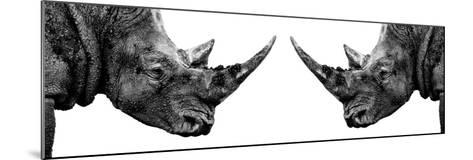 Safari Profile Collection - Rhinos Face to Face White Edition II-Philippe Hugonnard-Mounted Photographic Print