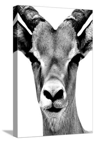 Safari Profile Collection - Portrait of Antelope White Edition-Philippe Hugonnard-Stretched Canvas Print
