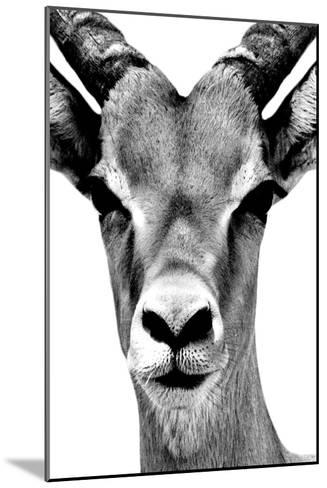 Safari Profile Collection - Portrait of Antelope White Edition-Philippe Hugonnard-Mounted Photographic Print