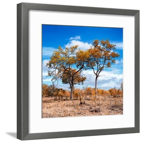 Awesome South Africa Collection Square - Savannah Trees in Fall Colors II-Philippe Hugonnard-Framed Art Print