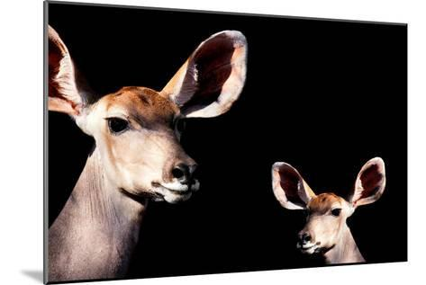 Safari Profile Collection - Antelope and Baby Black Edition-Philippe Hugonnard-Mounted Photographic Print