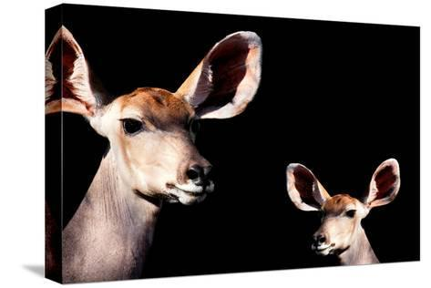 Safari Profile Collection - Antelope and Baby Black Edition-Philippe Hugonnard-Stretched Canvas Print