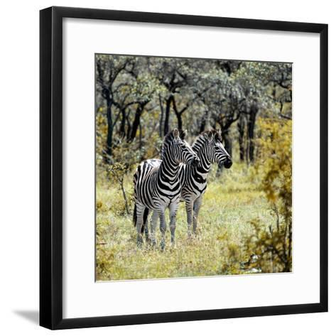 Awesome South Africa Collection Square - Two Common Zebras-Philippe Hugonnard-Framed Art Print