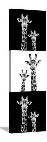 Safari Profile Collection - Two Giraffes III-Philippe Hugonnard-Stretched Canvas Print