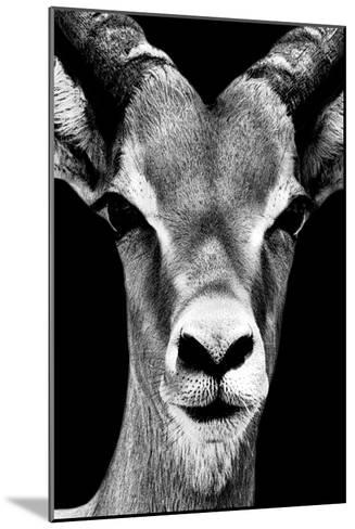 Safari Profile Collection - Portrait of Antelope Black Edition-Philippe Hugonnard-Mounted Photographic Print