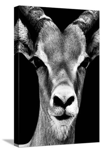 Safari Profile Collection - Portrait of Antelope Black Edition-Philippe Hugonnard-Stretched Canvas Print
