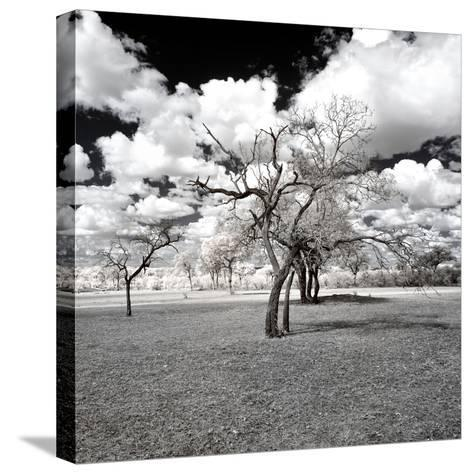 Awesome South Africa Collection Square - Another Look Savannah-Philippe Hugonnard-Stretched Canvas Print