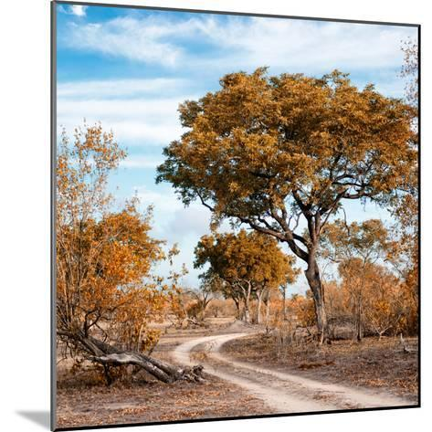 Awesome South Africa Collection Square - African Safari Road with Fall Colors-Philippe Hugonnard-Mounted Photographic Print