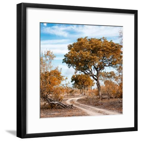 Awesome South Africa Collection Square - African Safari Road with Fall Colors-Philippe Hugonnard-Framed Art Print