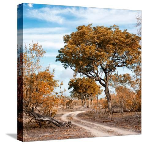 Awesome South Africa Collection Square - African Safari Road with Fall Colors-Philippe Hugonnard-Stretched Canvas Print
