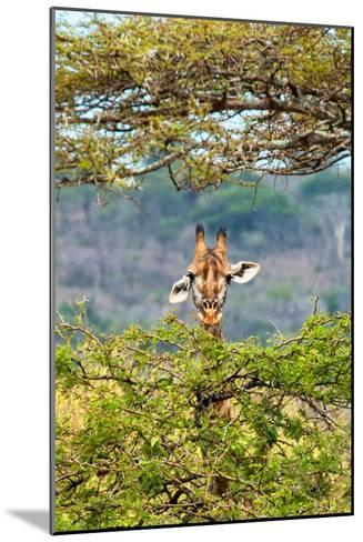 Awesome South Africa Collection - Curious Giraffe-Philippe Hugonnard-Mounted Photographic Print