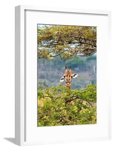 Awesome South Africa Collection - Curious Giraffe-Philippe Hugonnard-Framed Art Print