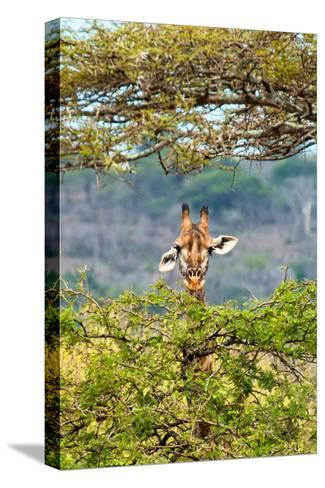Awesome South Africa Collection - Curious Giraffe-Philippe Hugonnard-Stretched Canvas Print