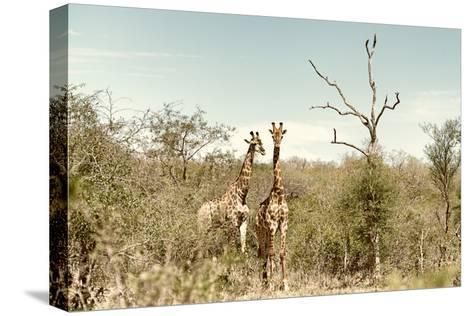 Awesome South Africa Collection - Two Giraffes I-Philippe Hugonnard-Stretched Canvas Print