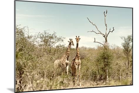 Awesome South Africa Collection - Two Giraffes I-Philippe Hugonnard-Mounted Photographic Print