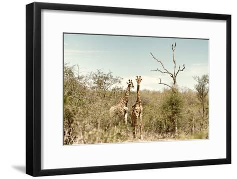 Awesome South Africa Collection - Two Giraffes I-Philippe Hugonnard-Framed Art Print